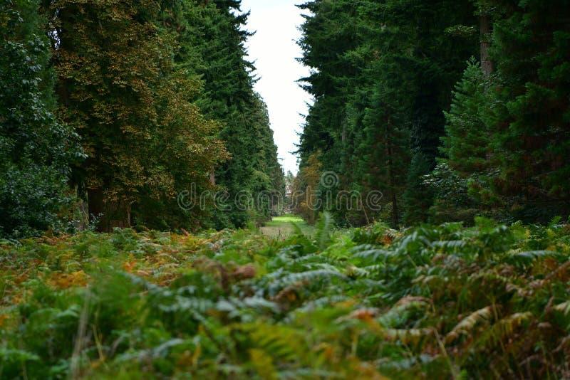 Forêt, champignons, ordures de forêt, ouatine, cônes, route images stock