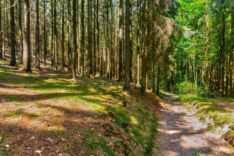Forêt chez Moravian Karst près de village de Krasova photo libre de droits