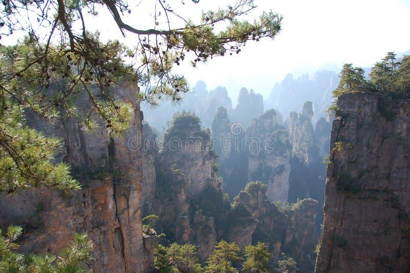 Forêt Chian reserve3 images libres de droits
