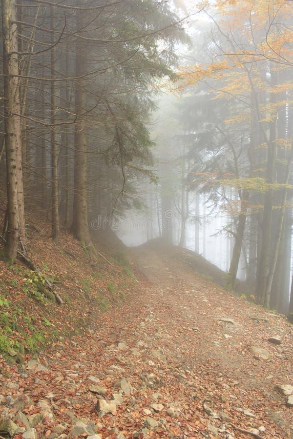 Forêt colorée image libre de droits