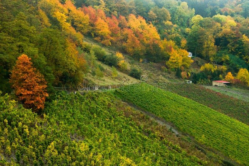 forêt colorée d'automne image libre de droits
