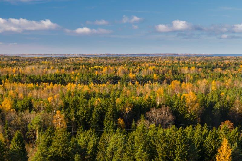 Forêt colorée d'automne contre le ciel bleu photos stock