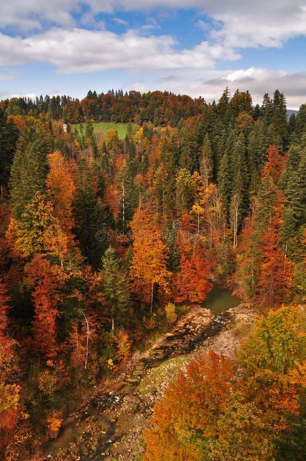 Forêt colorée en automne avec la rivière d'Autriche image stock