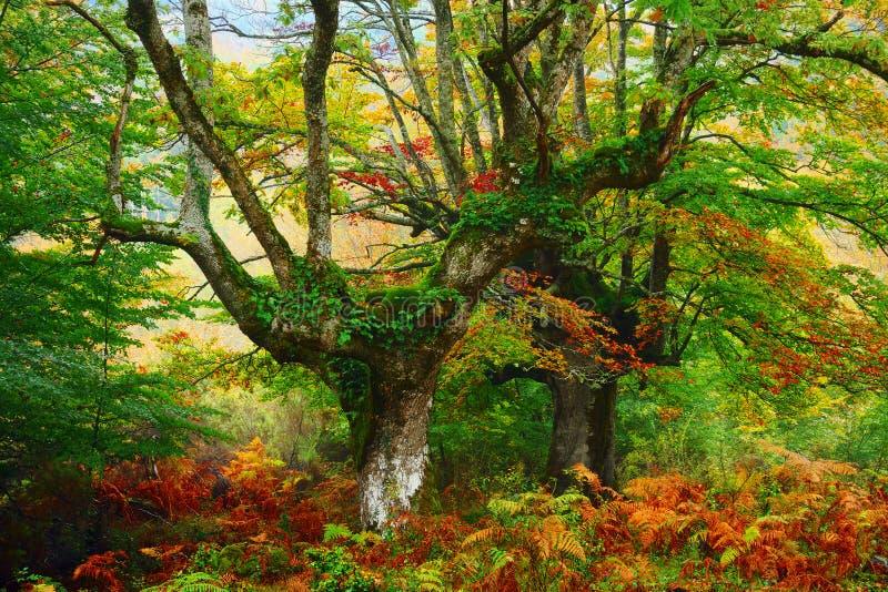 Forêt colorée en octobre photographie stock libre de droits