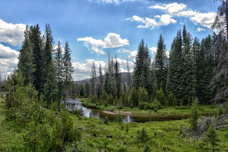 Forêt colorée en Rocky Mountain National Park dans la chute avec la neige image libre de droits