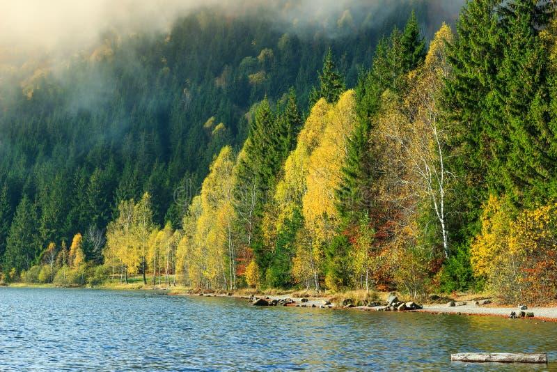 Forêt colorée majestueuse d'automne et paysage, saint Anna Lake, la Transylvanie, Roumanie photographie stock