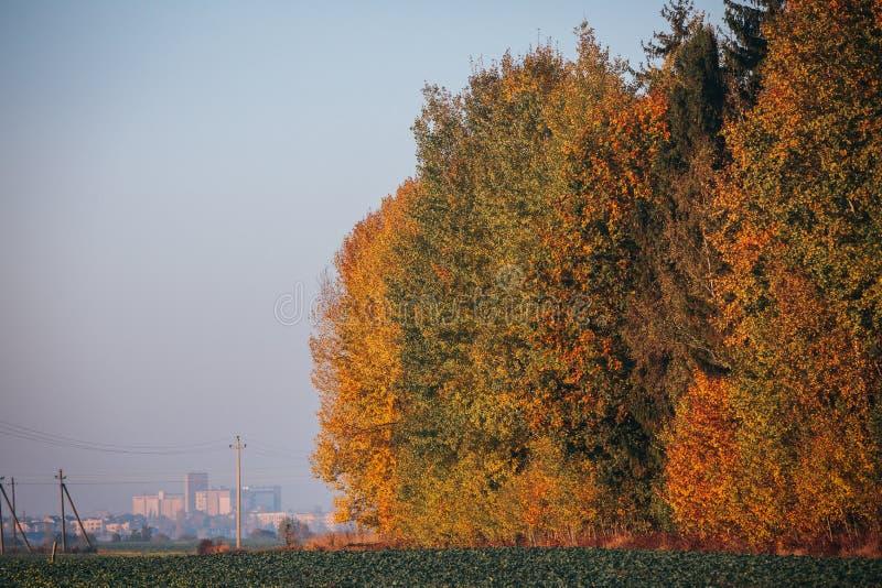 Forêt colorée par automne avec le moulin de blé de ville à l'arrière-plan image libre de droits