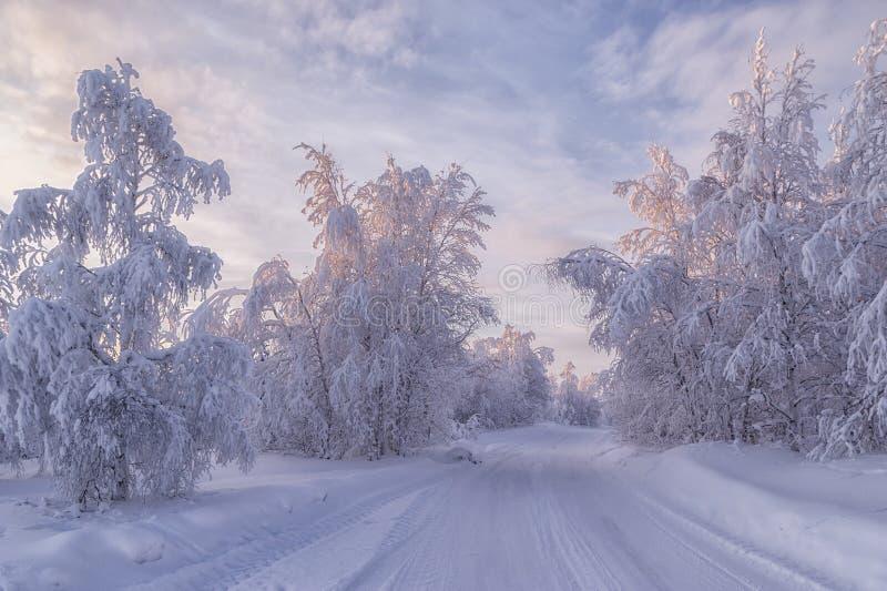 Forêt congelée photo stock