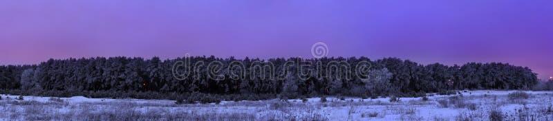 Forêt congelée de pin après bleu de panorama de coucher du soleil photographie stock libre de droits