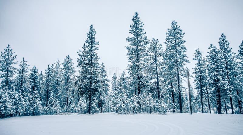 Forêt congelée froide blanche d'hiver dans l'état de Washington photos stock