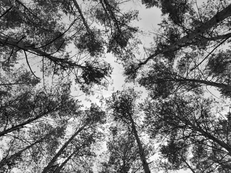 Forêt conifére images stock