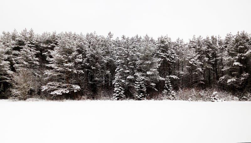 forêt conifére d'hiver, ciel blanc et neige Russie photographie stock libre de droits