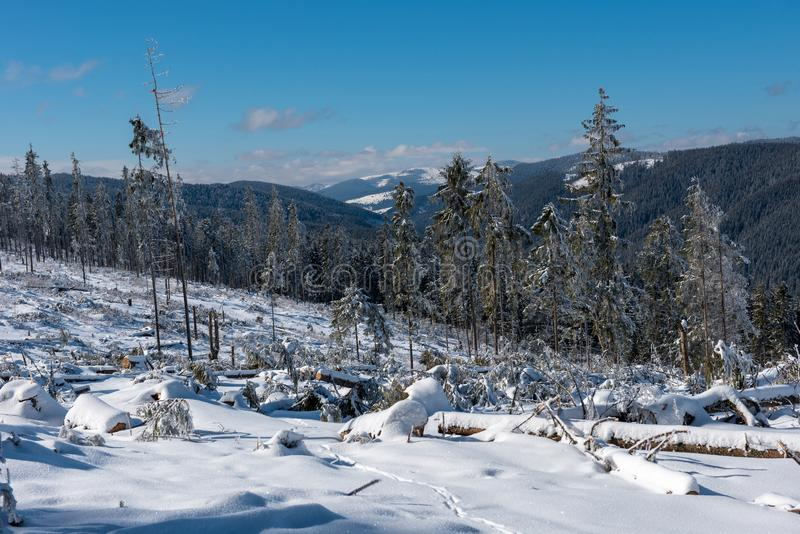 Forêt détruite d'hiver par la tempête image libre de droits