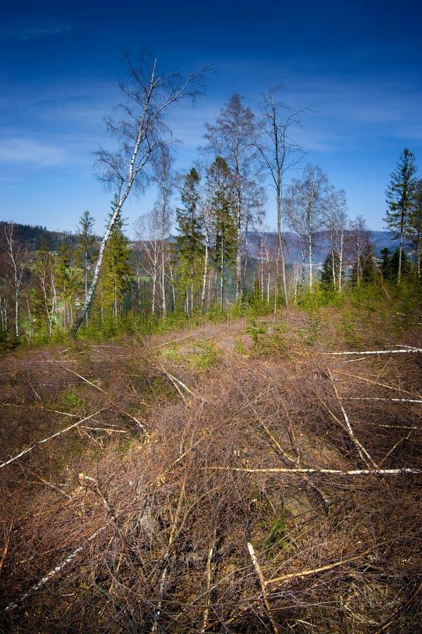 Forêt détruite par le vent images libres de droits