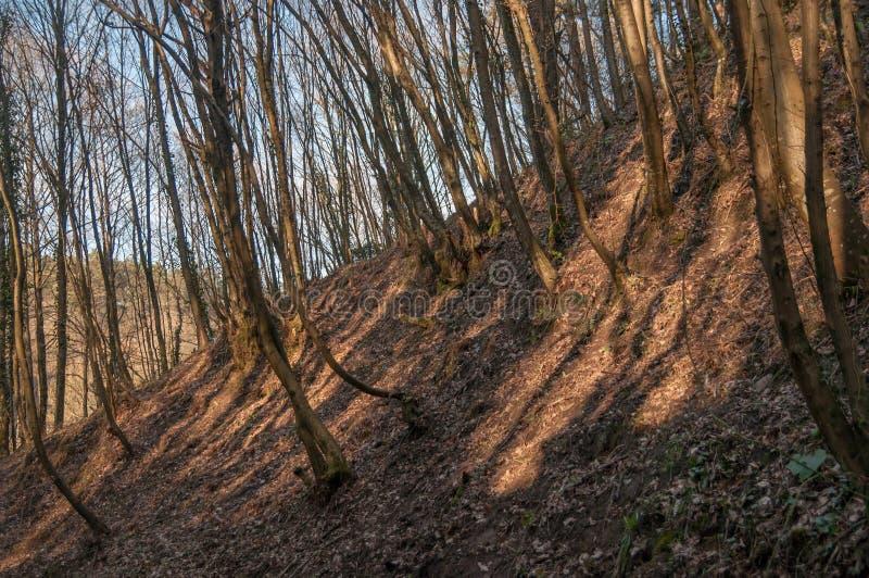 Forêt d'érosion du sol photographie stock libre de droits