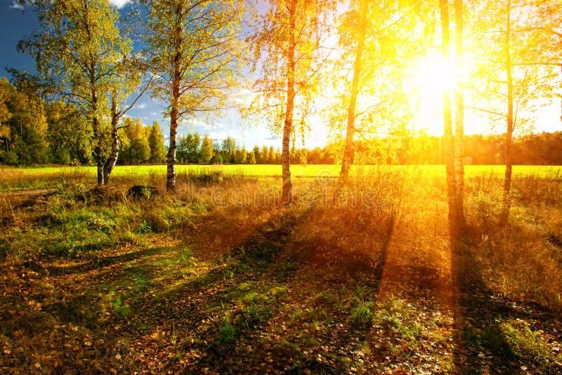 Forêt d'été photo stock