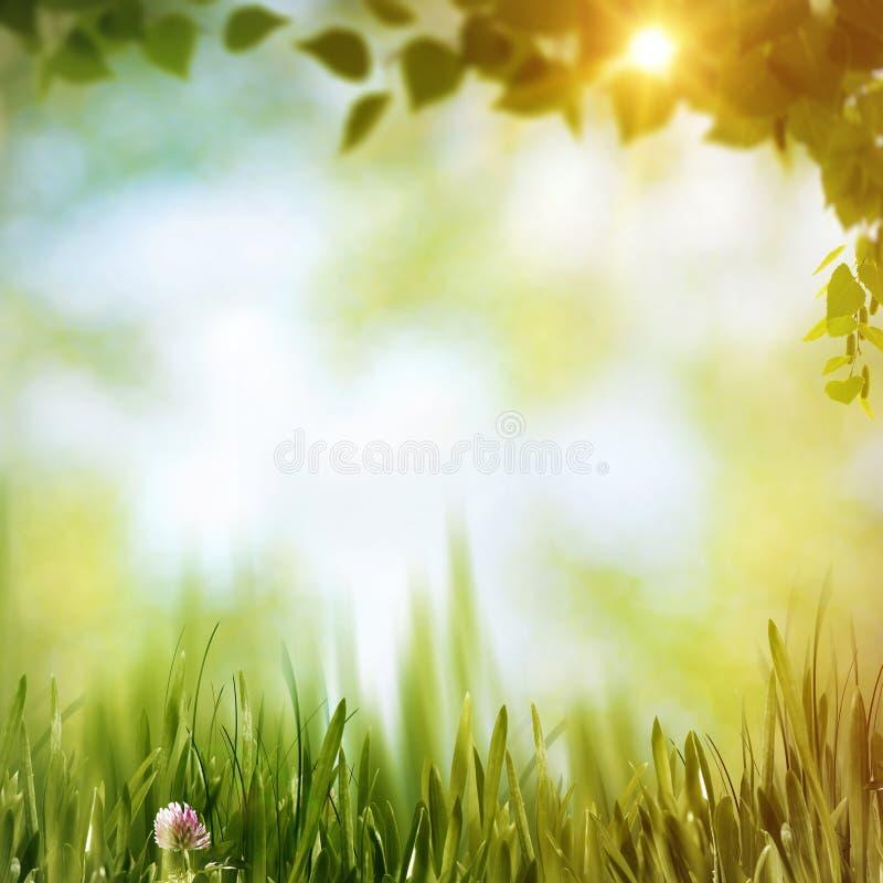 Forêt d'été images libres de droits