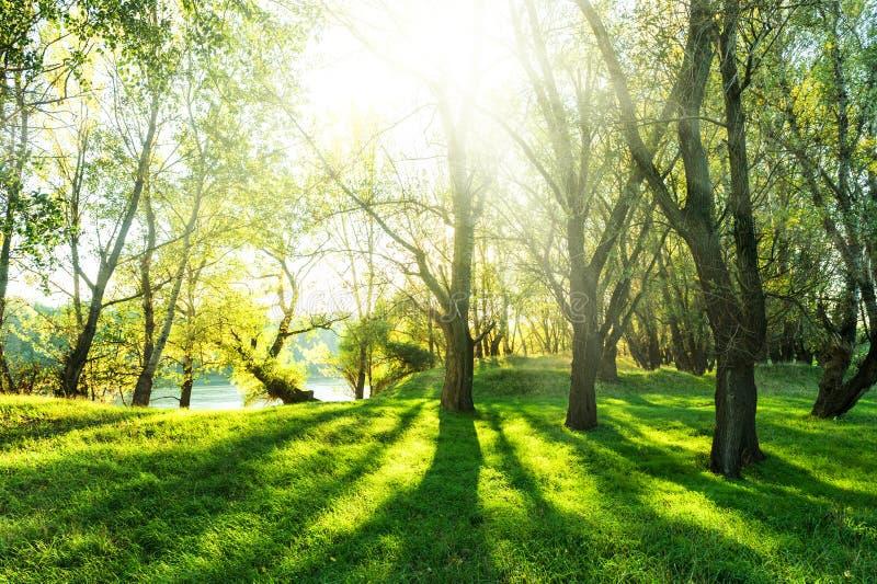Forêt d'été avec le soleil et l'ombre images stock