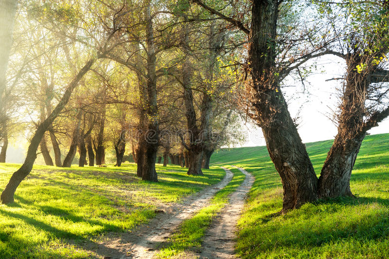 Forêt d'été avec le soleil et le chemin de terre photos stock