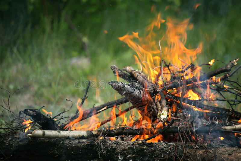 Forêt d'été d'incendie de feu de camp de feu photos libres de droits