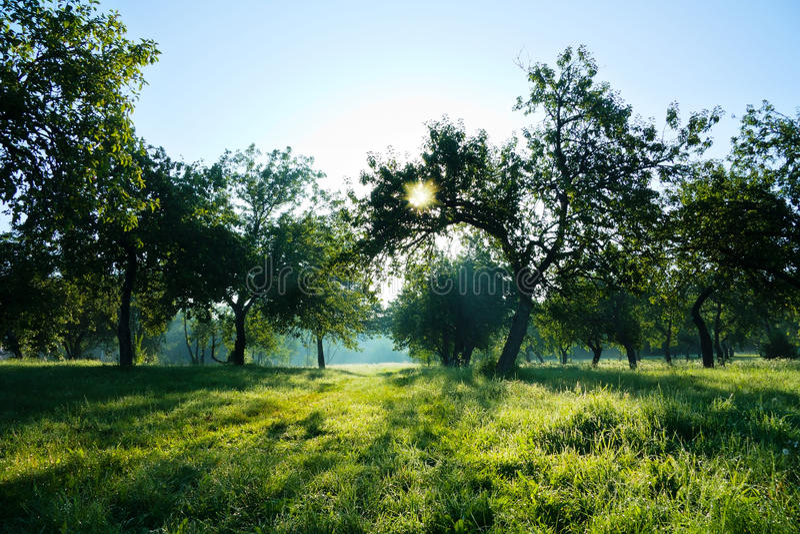 Forêt d'été, le soleil photographie stock