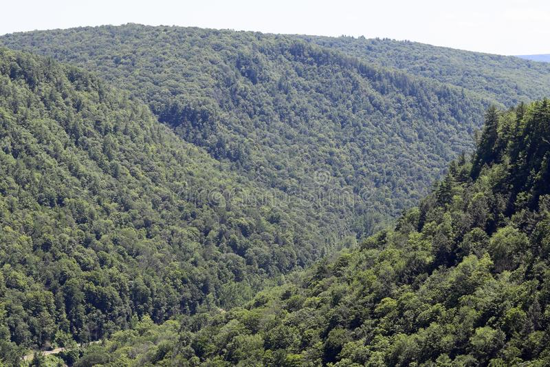 Forêt d'état de Tioga image stock