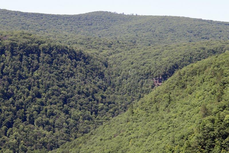 Forêt d'état de Tioga pendant l'été photo libre de droits