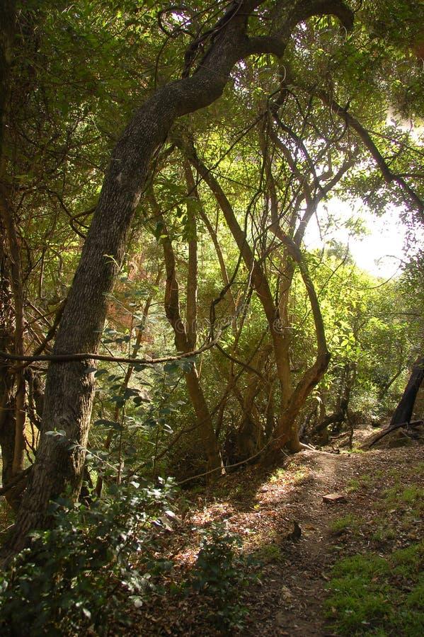 Forêt d'Afromontane dans Kouga, Afrique du Sud images stock