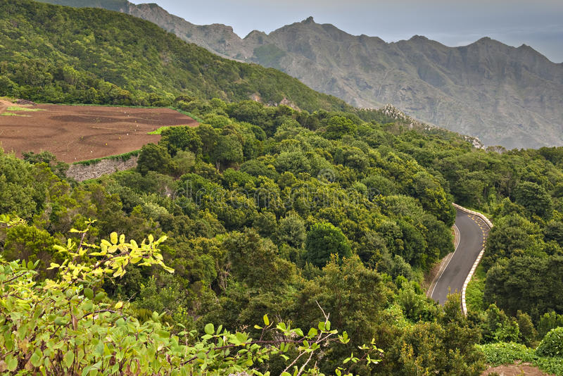 Forêt d'Anaga photos libres de droits