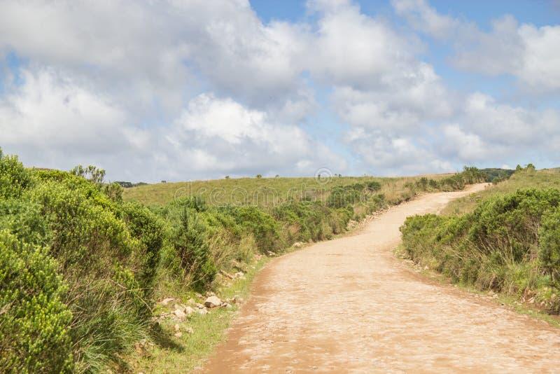 Forêt d'angustifolia de route et d'araucaria images libres de droits