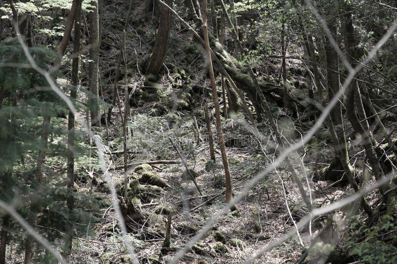 Aokigaharan Metsä