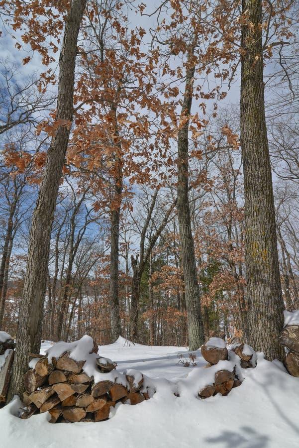 Forêt d'arbre à feuilles caduques pendant l'hiver près du Gouverneur Knowles State Forest dans le Wisconsin du nord - bois coupé  photographie stock libre de droits