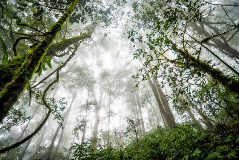 Forêt d'arbre dans la saison d'automne de la Thaïlande images libres de droits