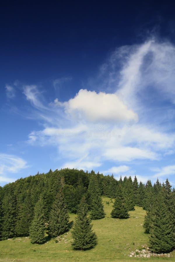 Forêt d'arbre de pin image stock