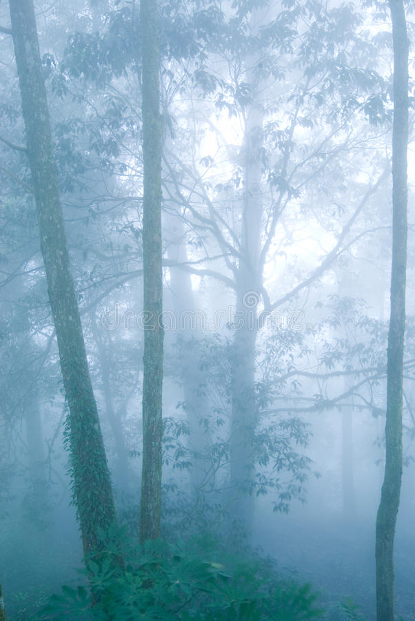 Forêt d'arbre de pin avec le regain. images stock