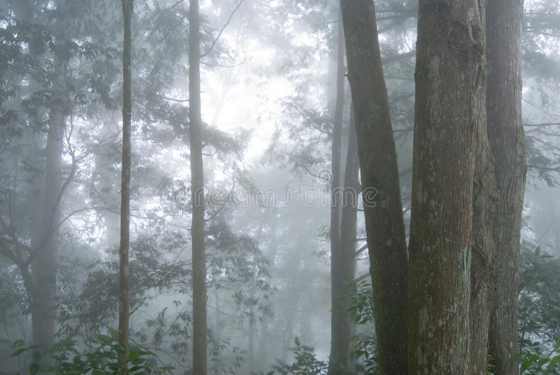Forêt d'arbre de pin avec le regain. photo stock