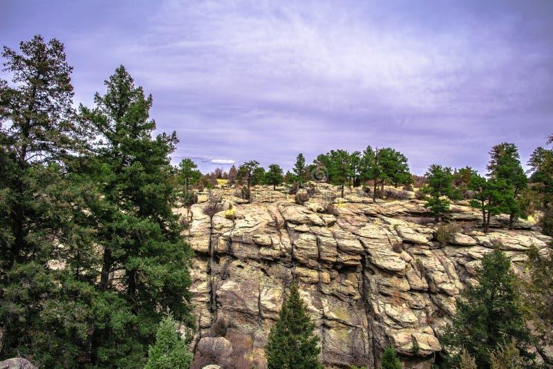 Forêt d'arbres en canyon de Castlewood dans le Colorado image stock