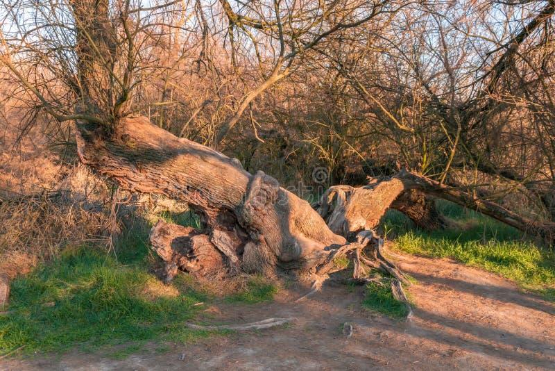 Forêt d'arbres en parc national de Tablas De Daimiel Ciudad r?el l'espagne photographie stock