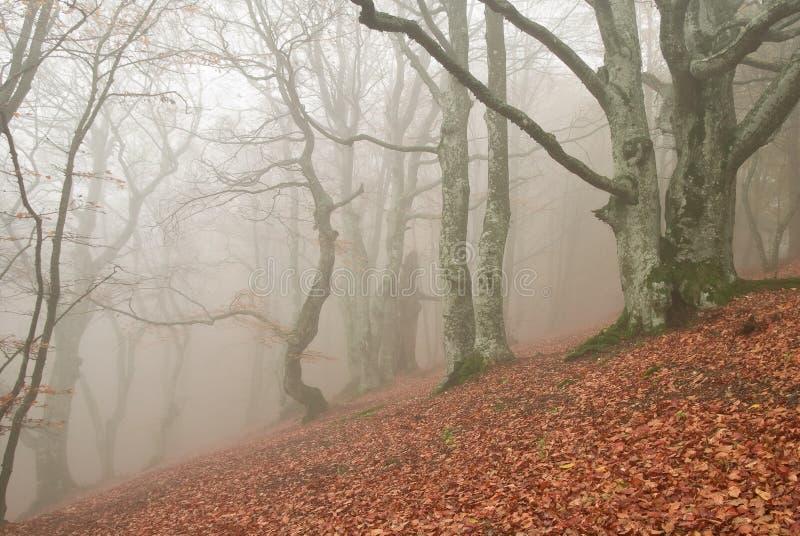 Forêt d'automne photos stock