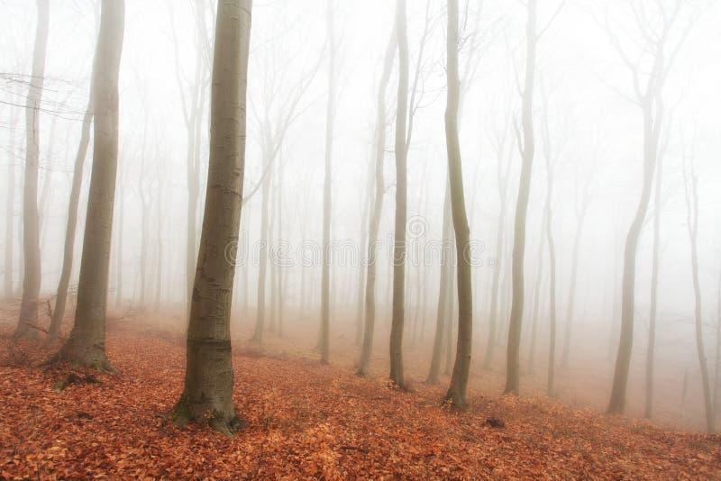 Forêt d'automne avec des arbres à la brume images stock