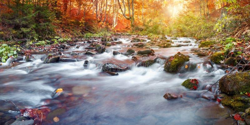 Forêt d'automne, courant de montagne Beau, roches couvertes de la mousse rapide et cascades de rivière carpathien photographie stock
