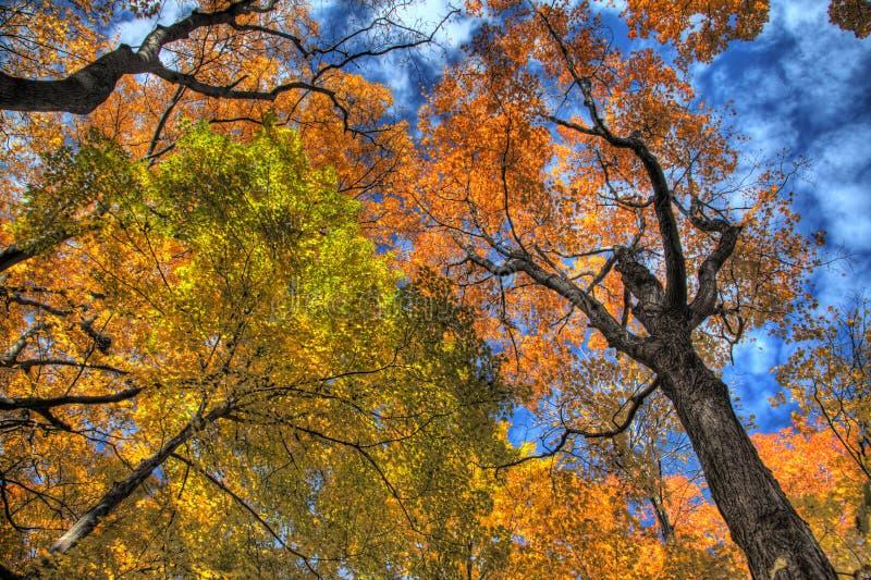 Forêt d'automne dans HDR images stock