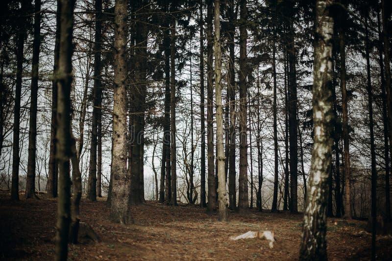 Forêt d'automne dans la station de vacances scandinave de parc national, couleur d'automne images stock