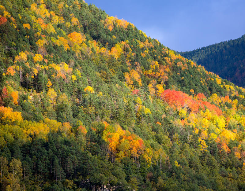 Forêt d'automne dans Pyrénées Valle de Ordesa Huesca Espagne photo stock