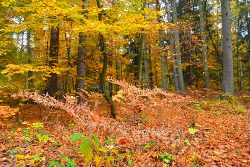 Forêt d'automne en novembre images stock
