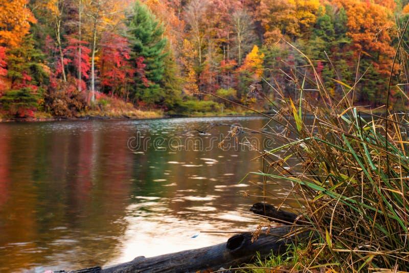 Forêt d'automne par le lac photos stock