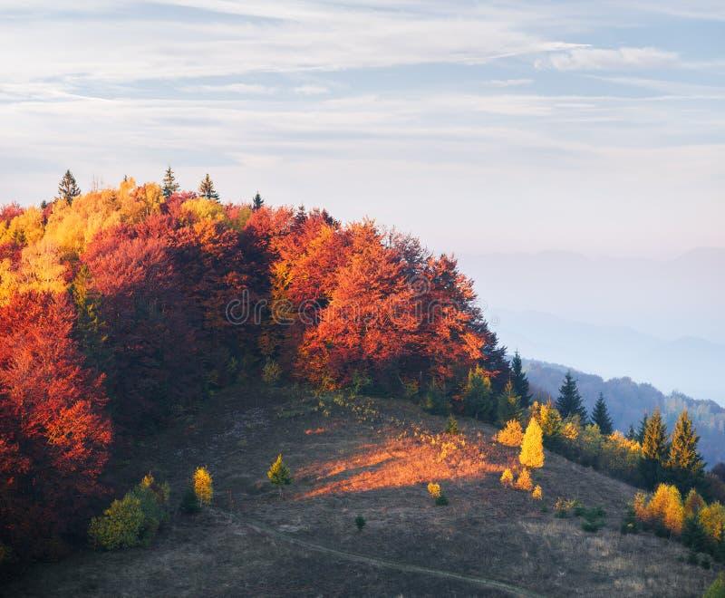 Forêt d'automne sur la colline photo stock