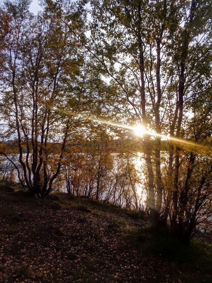 Forêt d'automne sur le rivage du lac Semenovskoe photographie stock