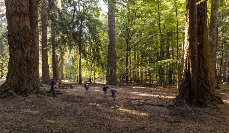 Forêt d'entraînement ornemental de Rhinefield nouvelle images libres de droits