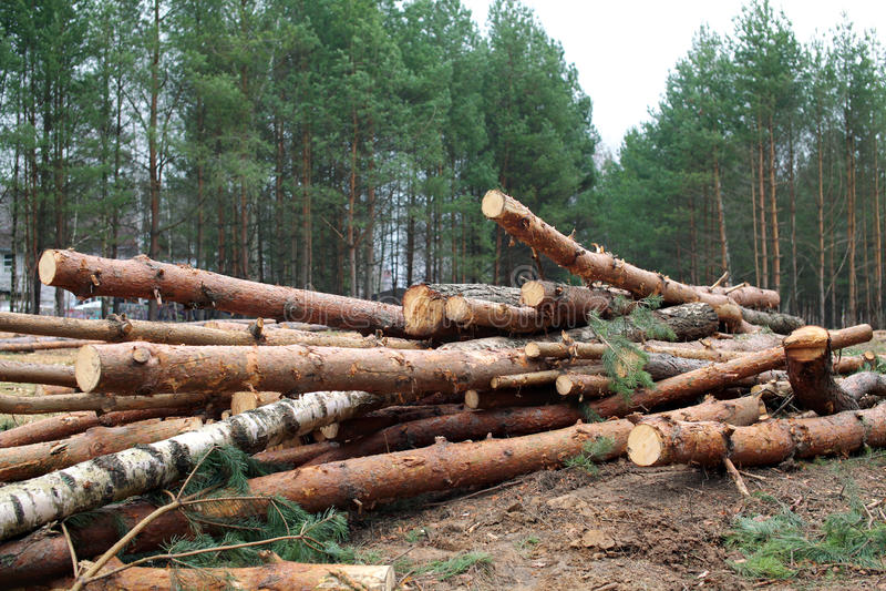Forêt d'environnement, de nature et de déboisement - abattage des arbres photographie stock libre de droits